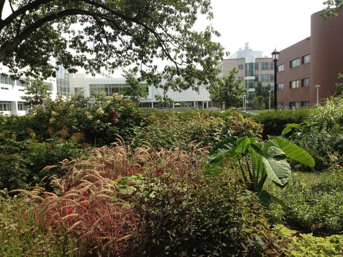 Weill and Biotech from Minns Garden
